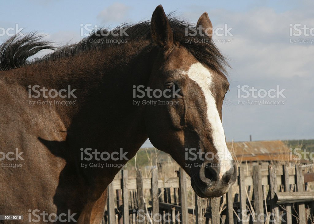 Brown horse. stock photo