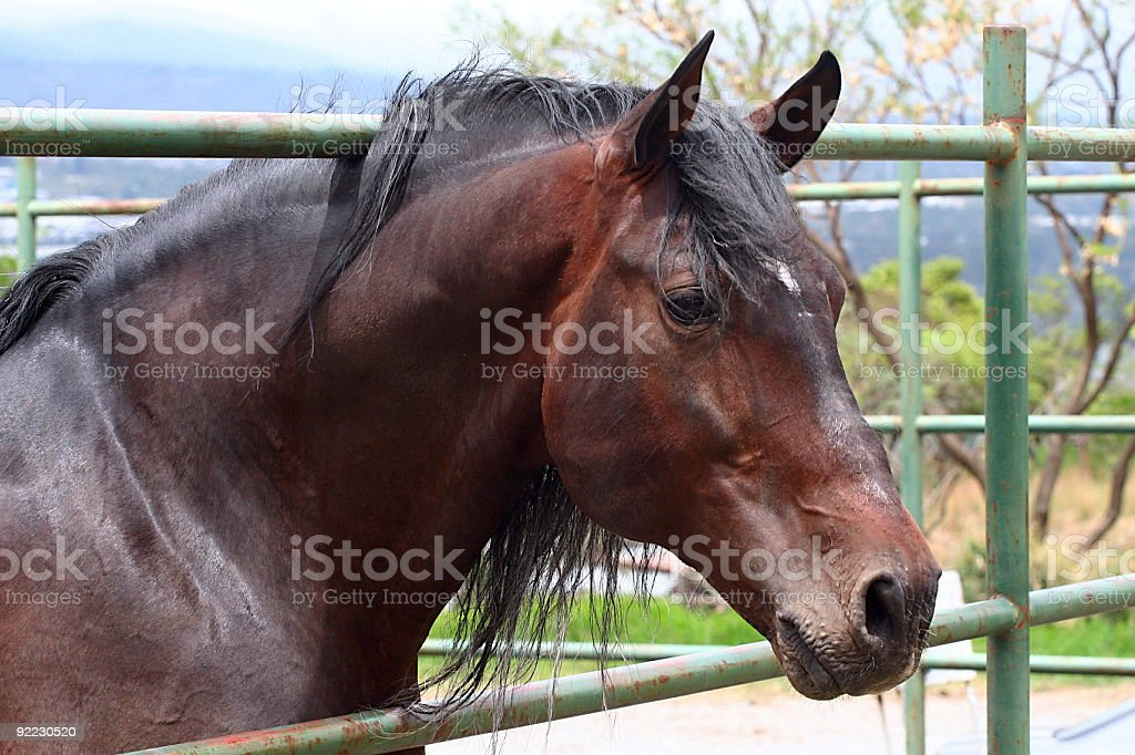 Brown Horse Portrait royalty-free stock photo