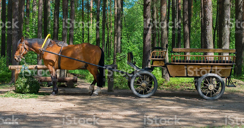 Brown horse with cart in the forest. stock photo