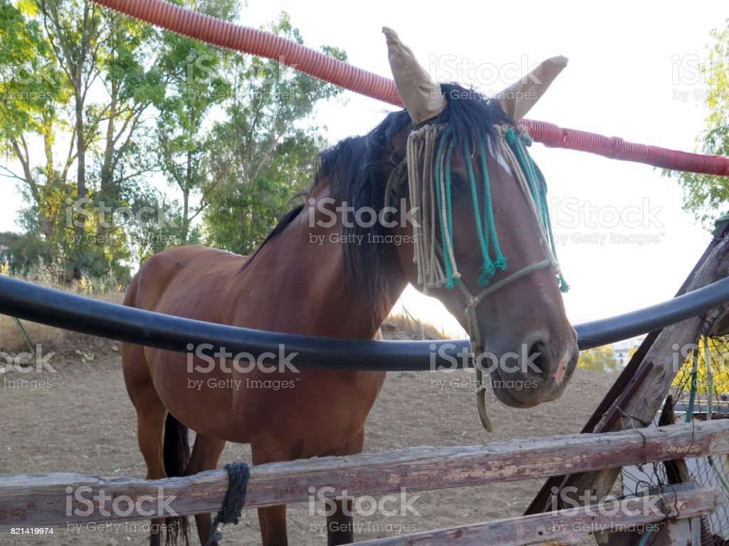 Brown horse with ear and eye protection from flies looking through makeshift rustic fence stock photo