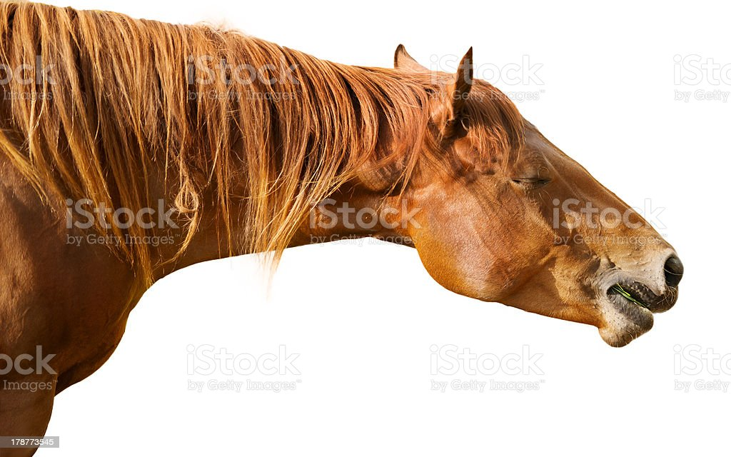 Brown horse with eyes closed royalty-free stock photo