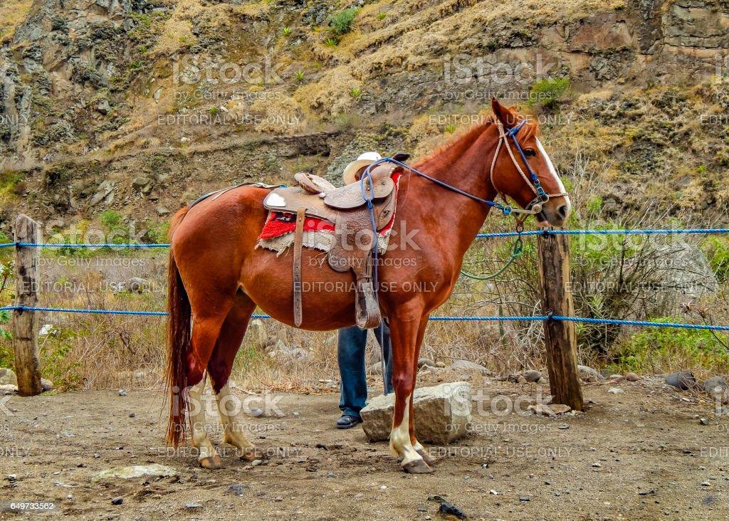 Brown Horse with his Rider Resting Alausi Ecuador stock photo