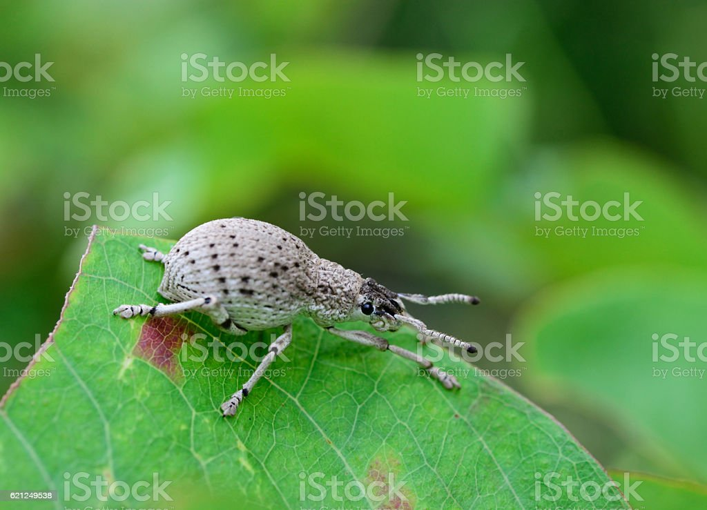 brown insect on green leaf stock photo