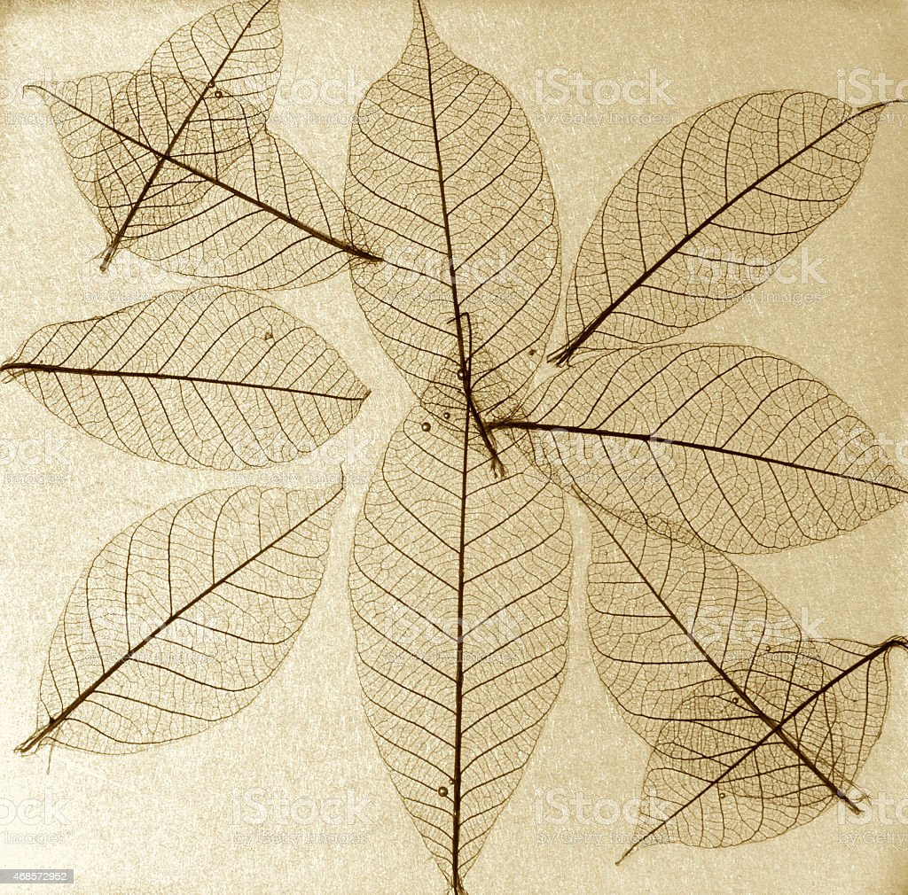 Brown leaves background royalty-free stock vector art