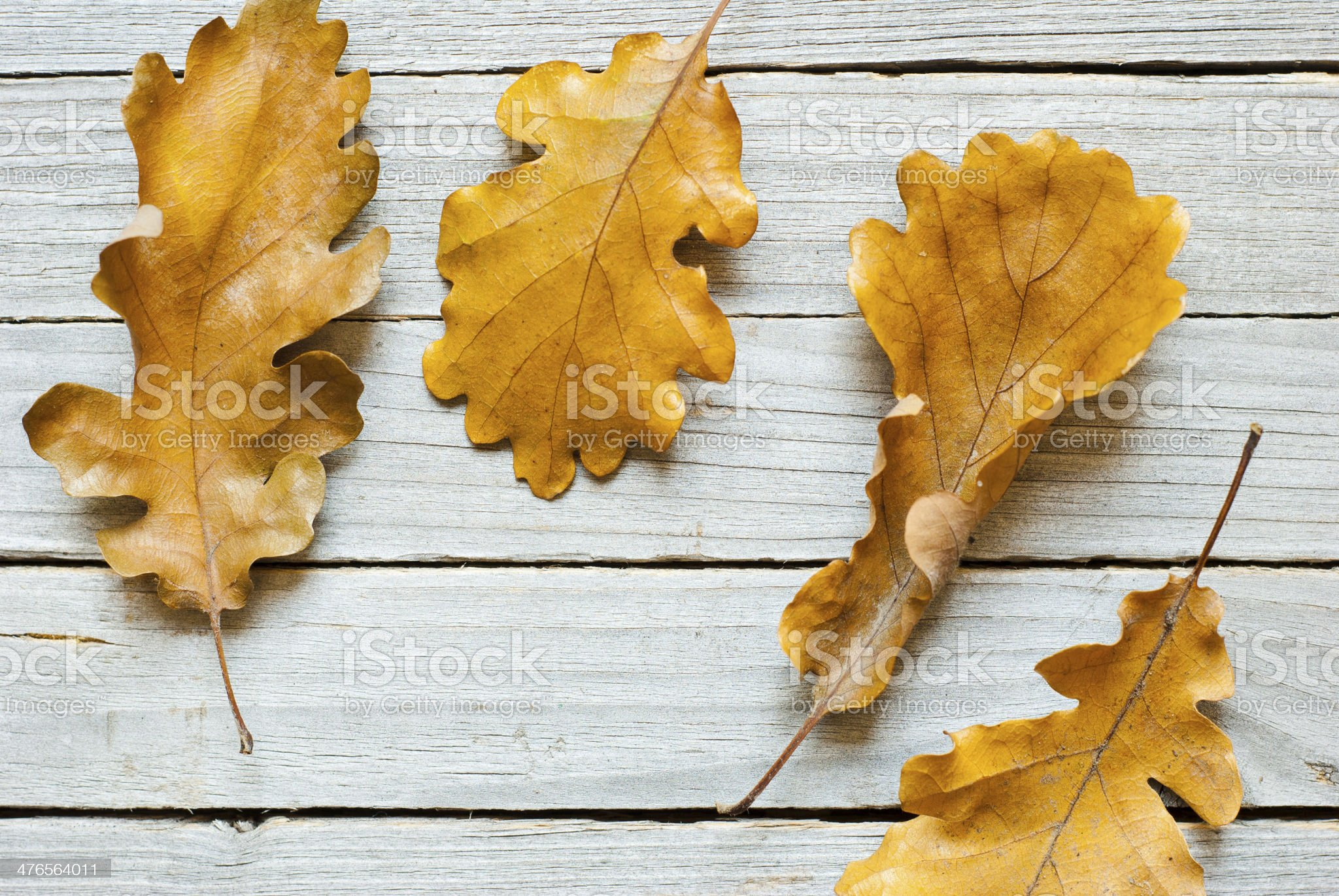 Brown leaves royalty-free stock photo