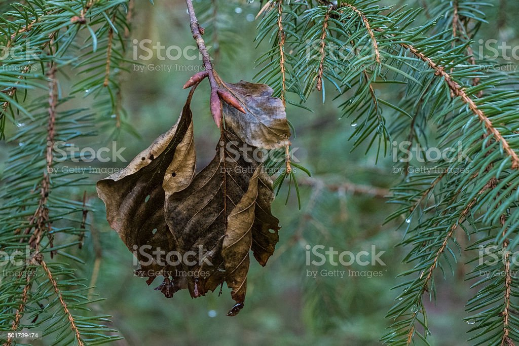 Brown leaves stock photo