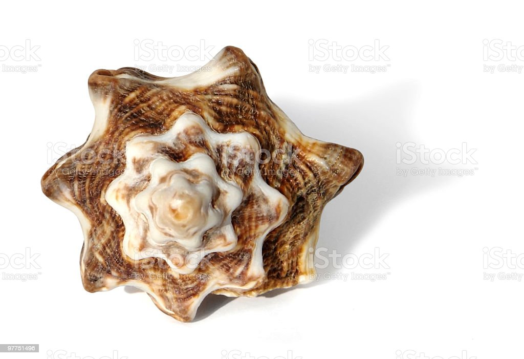 brown marbled seashell stock photo