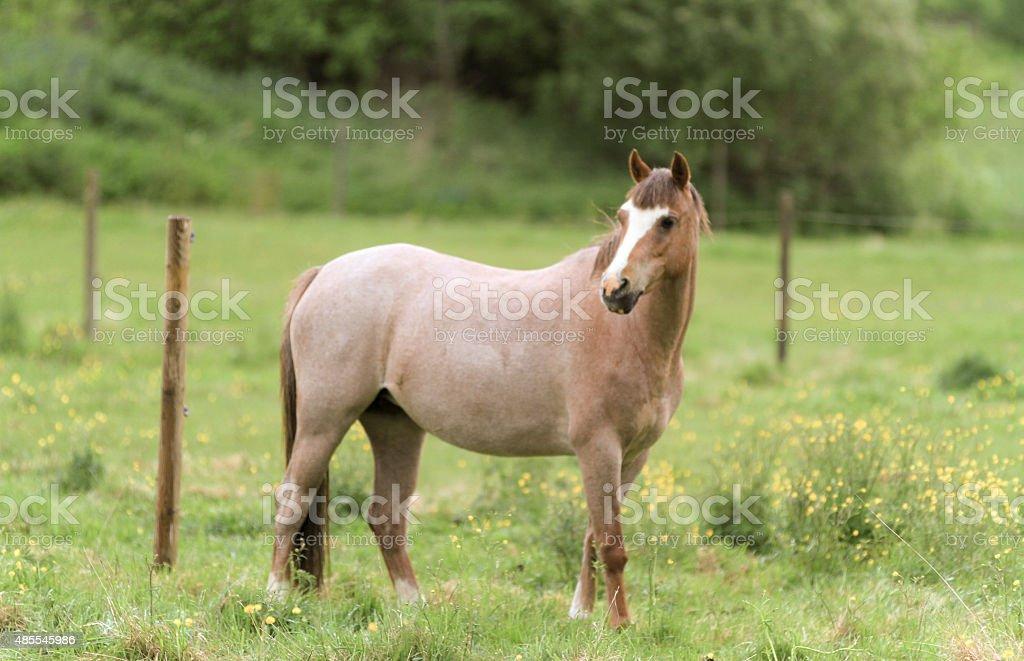 Brown mare stock photo