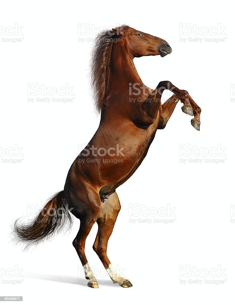 brown mare - the Budenny horse stock photo