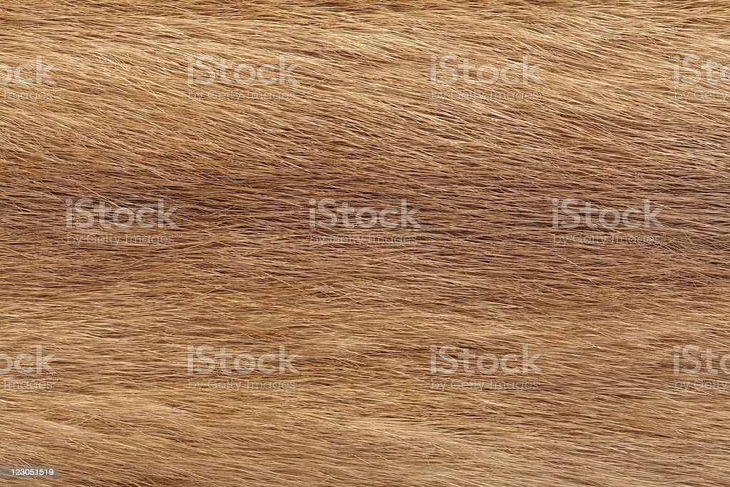 Brown Mink fur stock photo