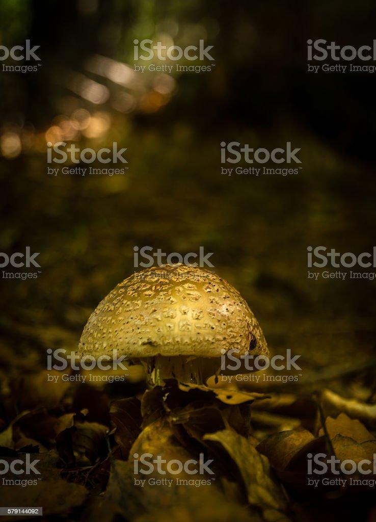 Brown mushroom teastool stock photo