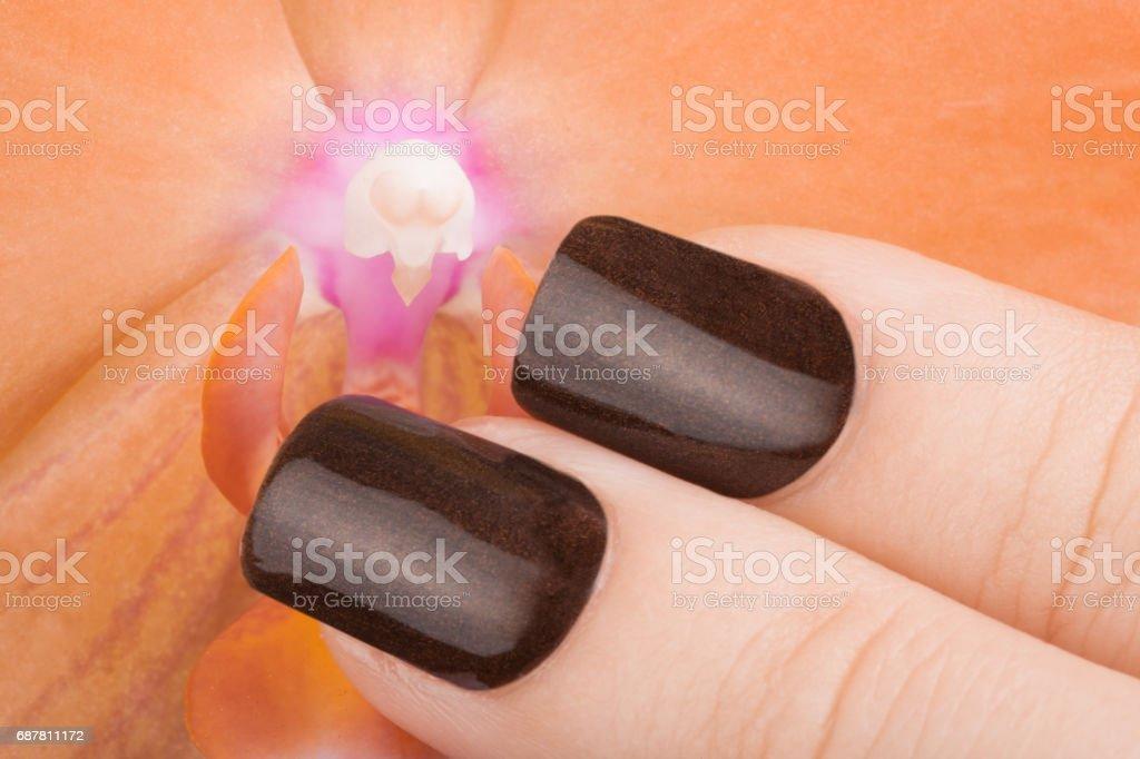 Brown nail polish on the nails. stock photo