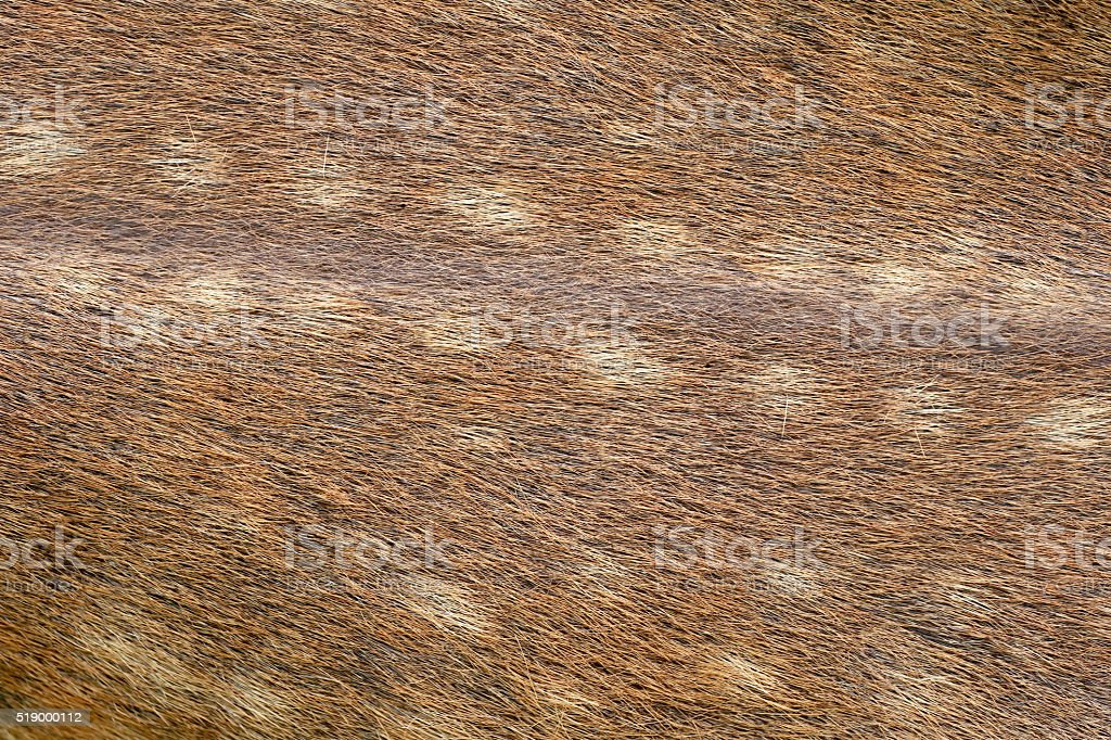 brown of animals skin and fur. stock photo