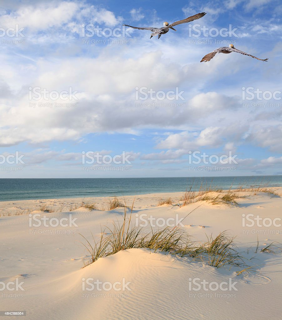 Brown Pelicans Fly Over White Sand Beach stock photo