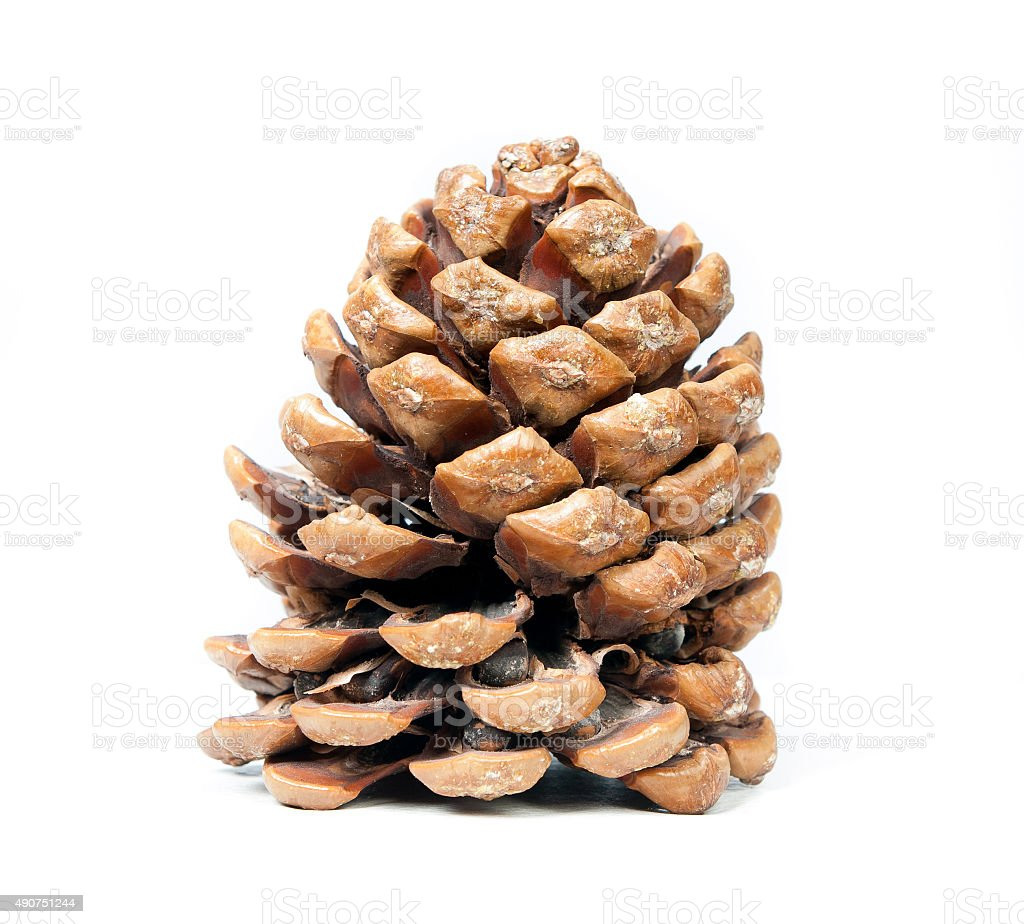 brown pine stock photo