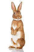 Brown rabbit standing up