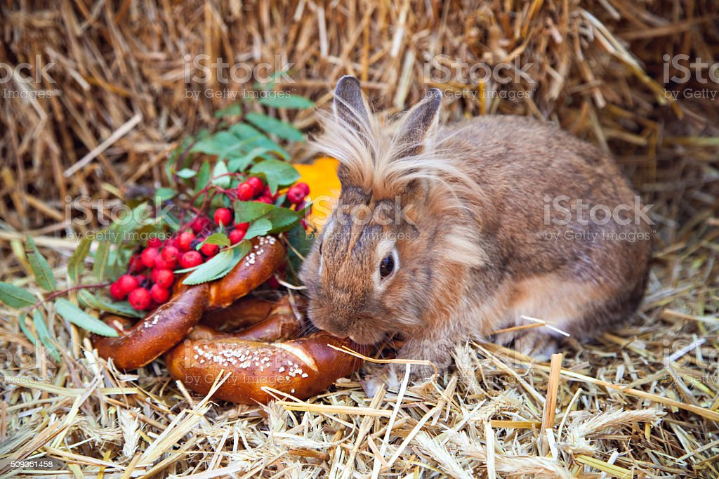 Brown rabbit with pretzels and pumpkin stock photo