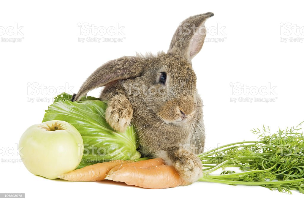 brown rabbit with vegetables isolated stock photo