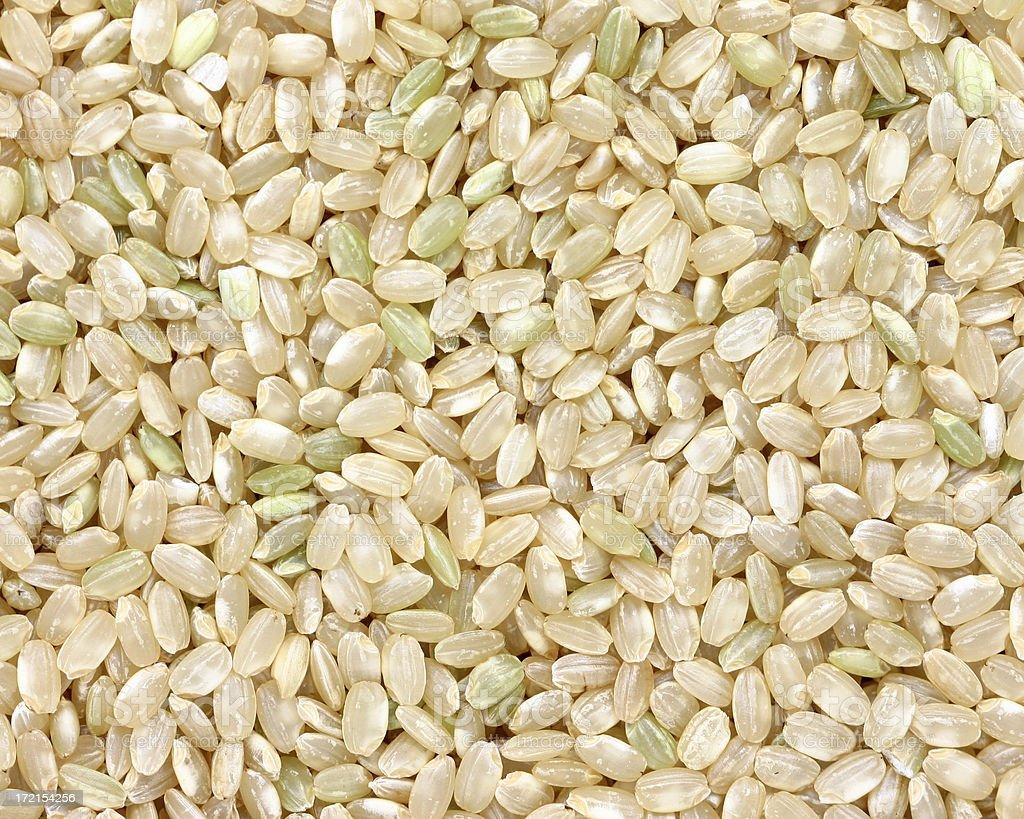 brown rice (short grain) royalty-free stock photo