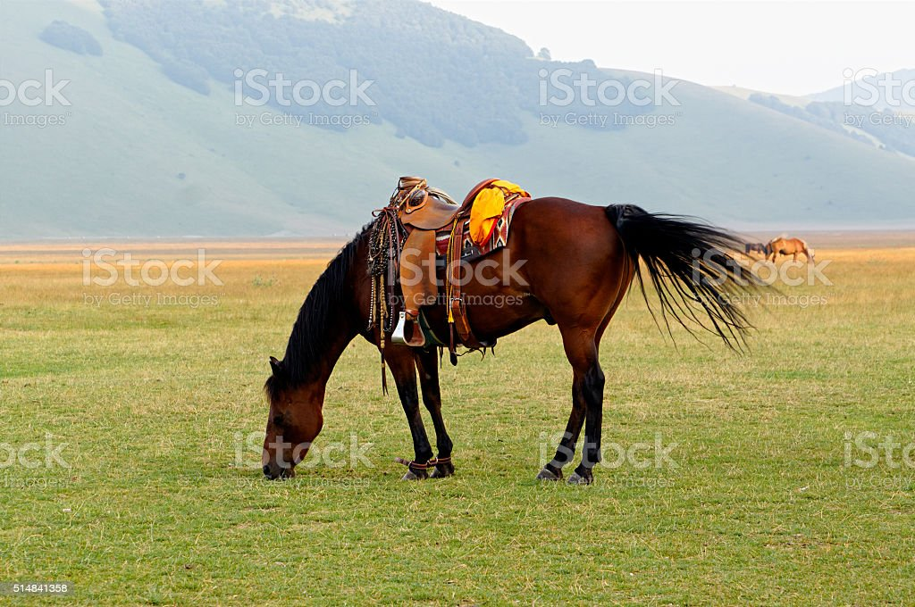 Brown saddled horse grazing in field. stock photo