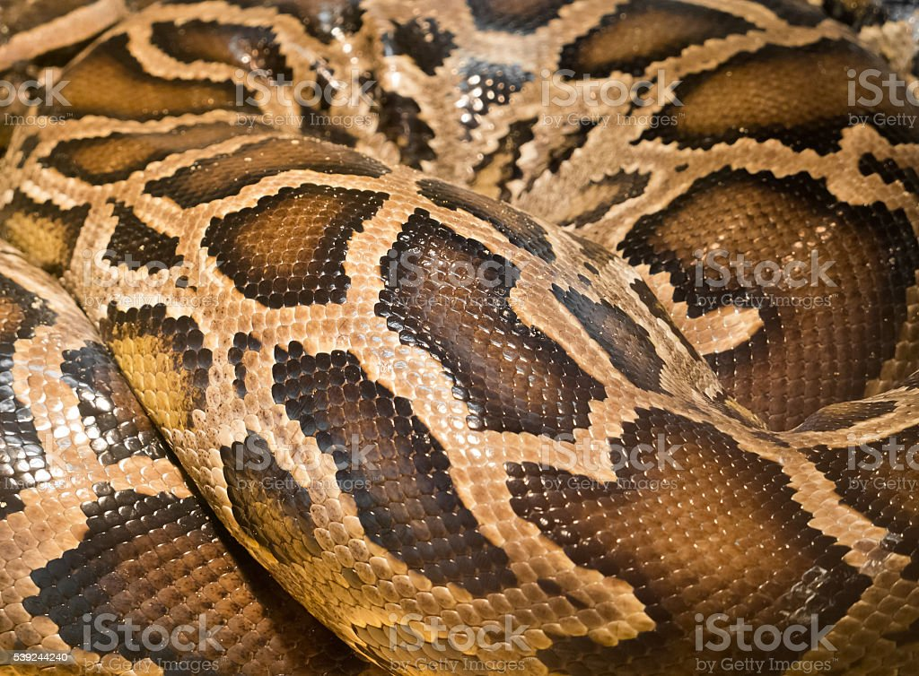 Brown snake skin stock photo