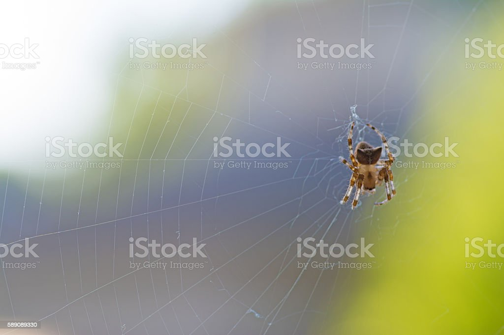 Brown Spide on Web stock photo