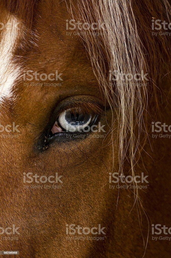 brown stallion royalty-free stock photo