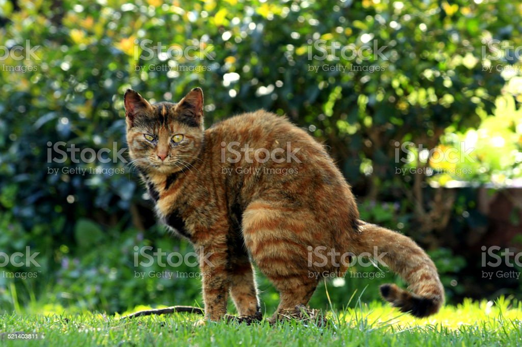 Brown striped cat stock photo