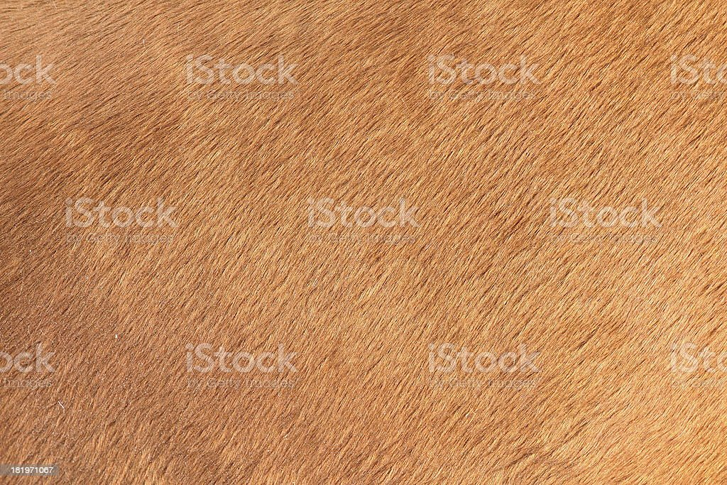 brown texture of horse hair stock photo