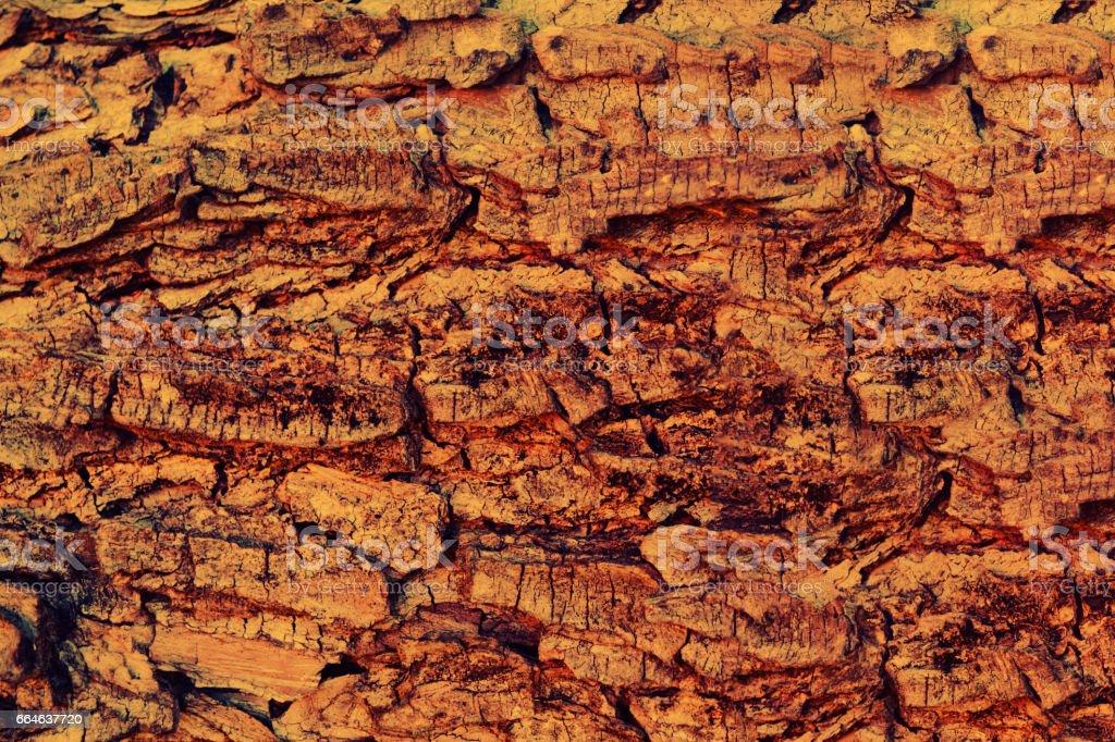brown tree bark texture background stock photo