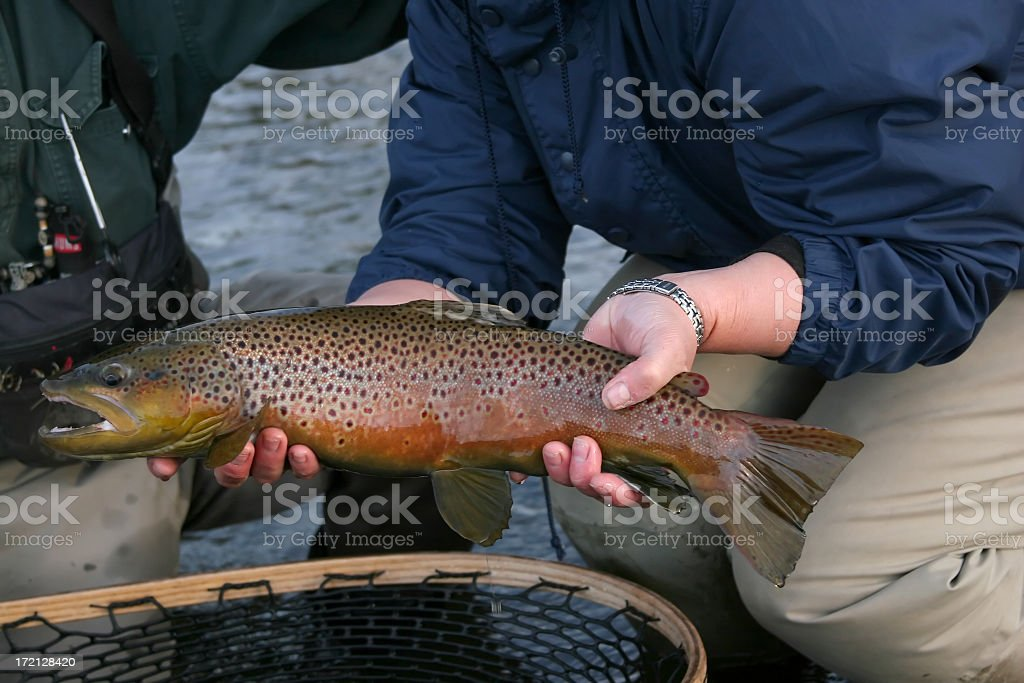 Brown Trout Caught on the Big Hole River stock photo