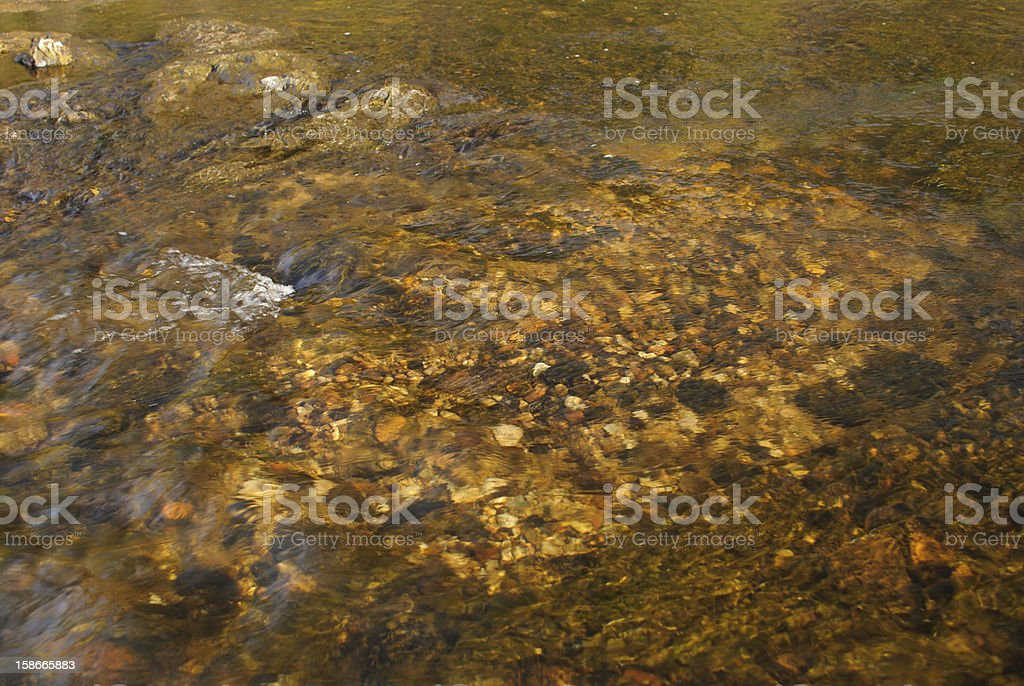 Brown Trout Redd royalty-free stock photo