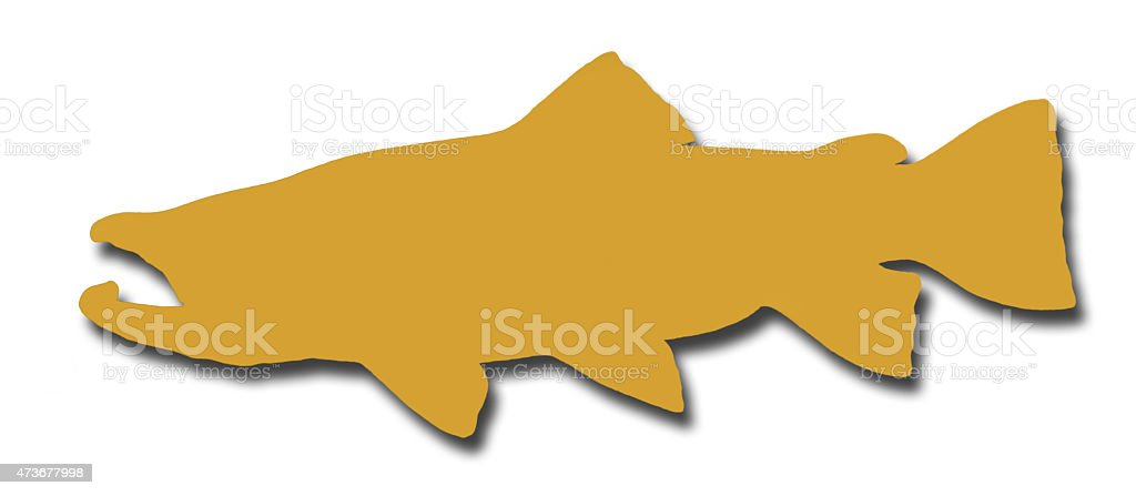 Brown Trout silhouete on white with a shadow stock photo