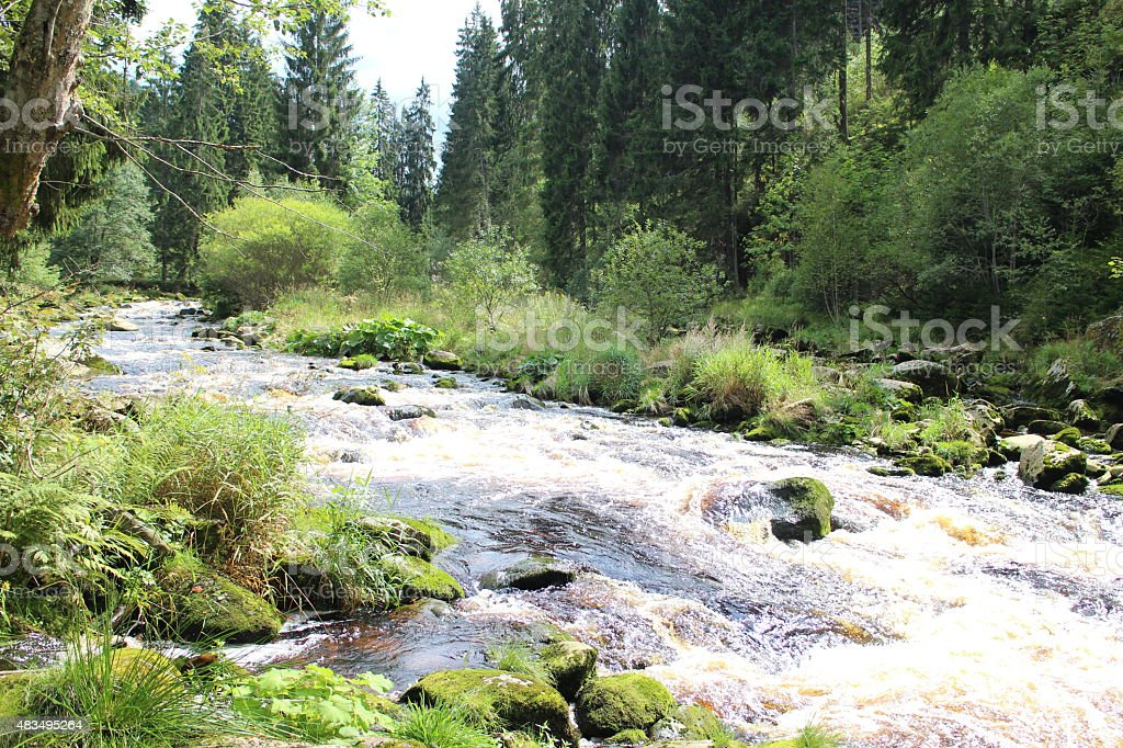 Brown water in a forest stream stock photo