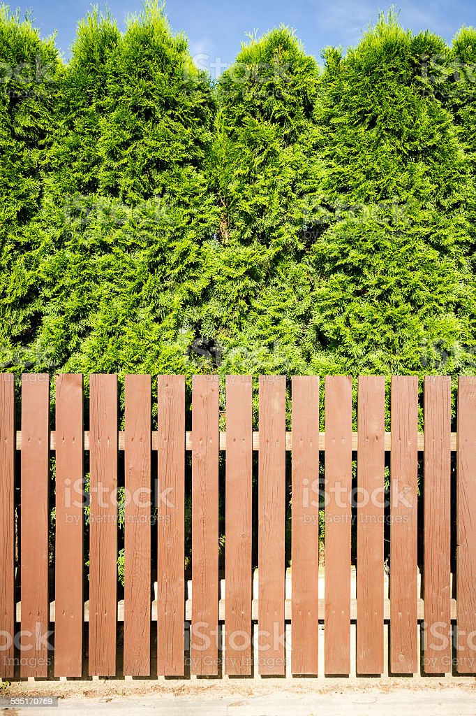 Brown wooden fence and thujas hedge stock photo