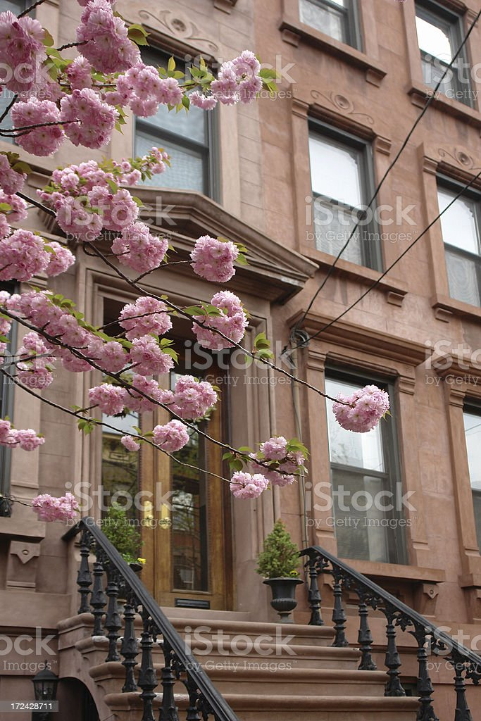 brownstones in bloom royalty-free stock photo