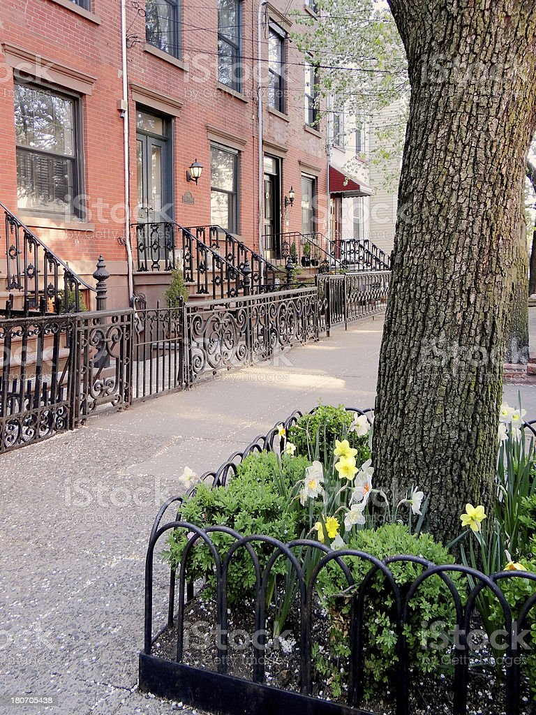 Brownstones on a tree-lined street royalty-free stock photo