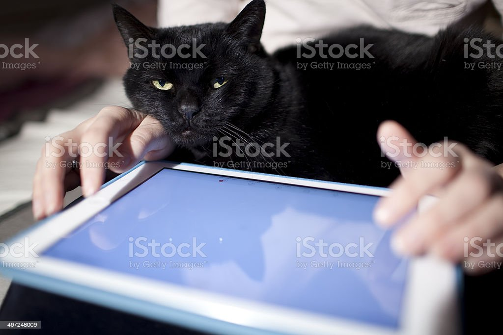 Browsing on touchpad royalty-free stock photo