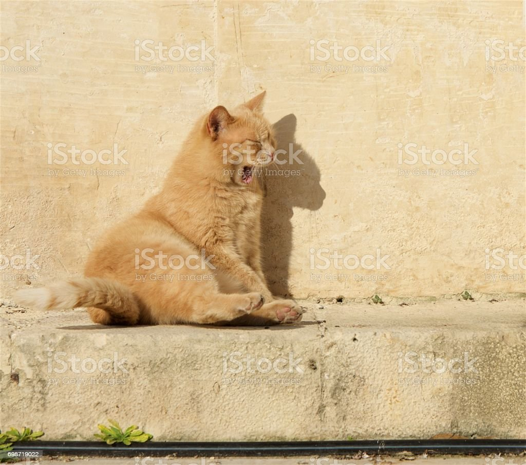 BroYellowwn cat relaxing on a sun in the bar. Valletta, Malta. Maltese cat. Cat relaxing on a sun stock photo