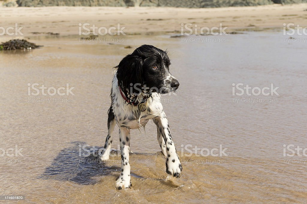Brrr it's cold royalty-free stock photo