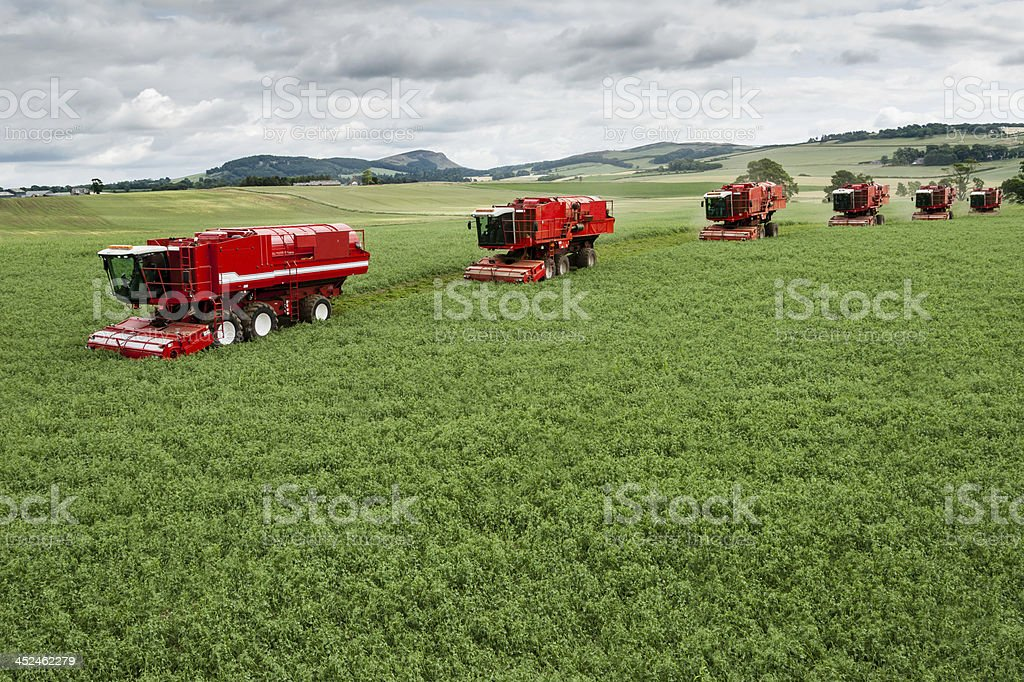 Bruce Farms pea harvest 2013 made with several red machines stock photo