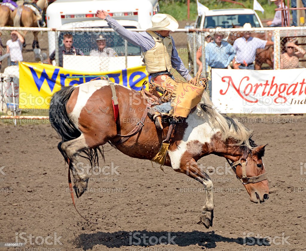 Bruce Stampede Rodeo stock photo