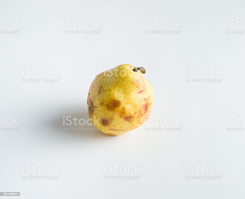 Bruised and Spotted Pear Fruit stock photo