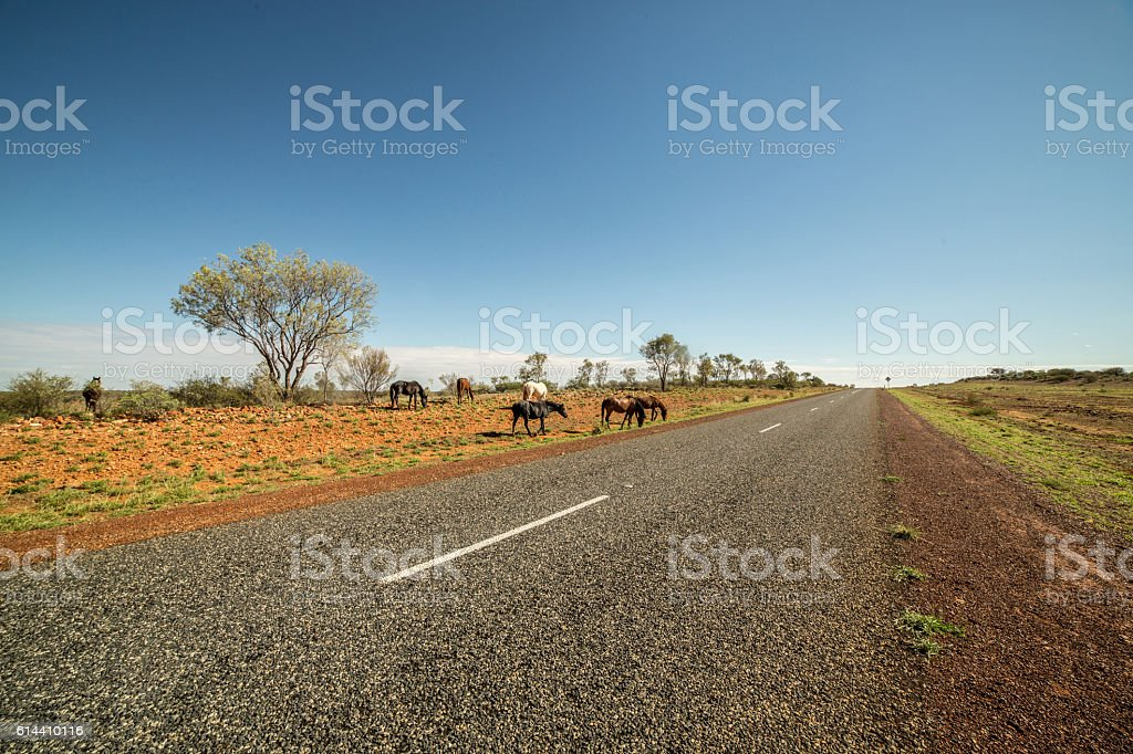 Brumbies by the roadside stock photo