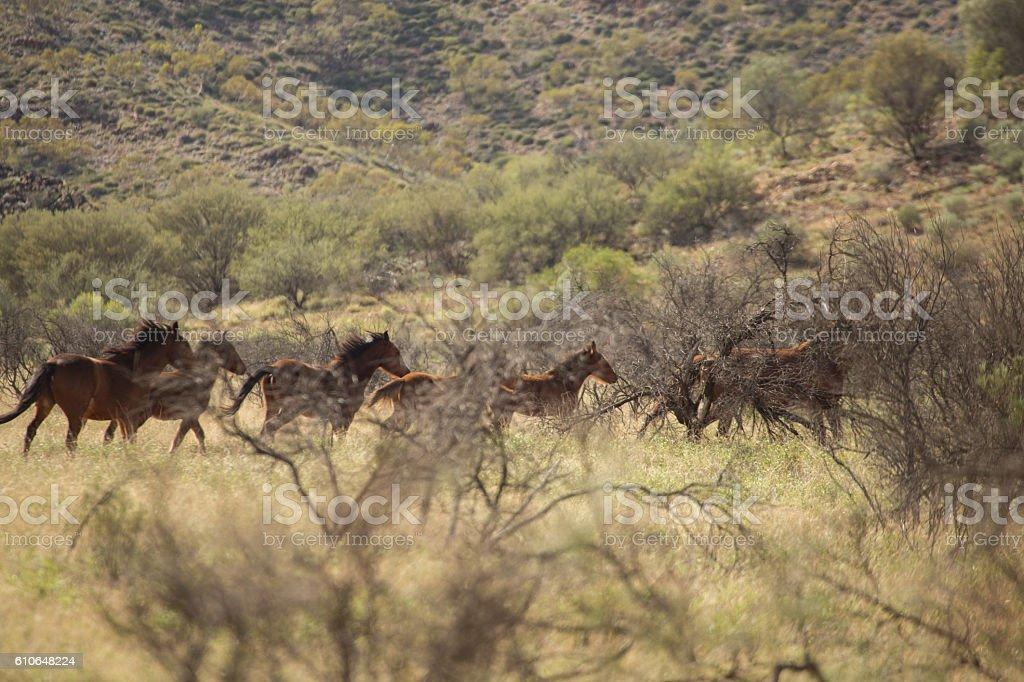 Brumbies running away stock photo