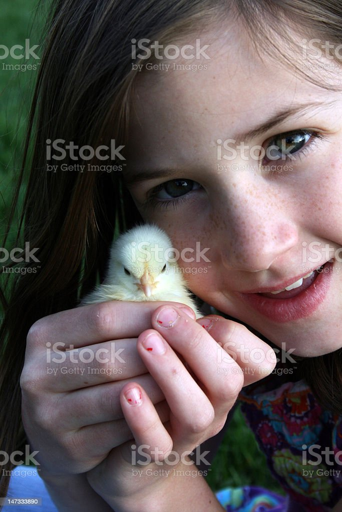 Brunette girl holding baby chicken royalty-free stock photo