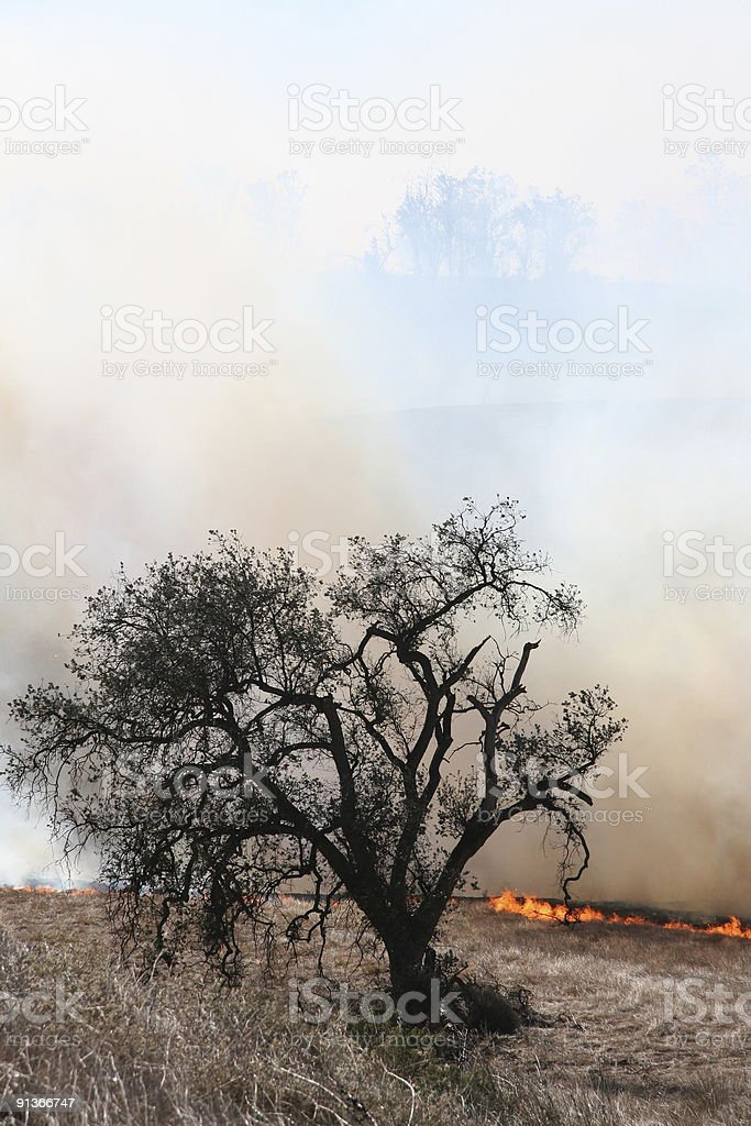 Cepillo fuego s'aproxima un árbol foto de stock libre de derechos