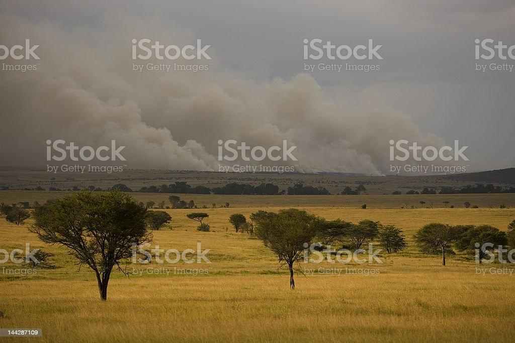 Escova incêndios no Quênia foto royalty-free