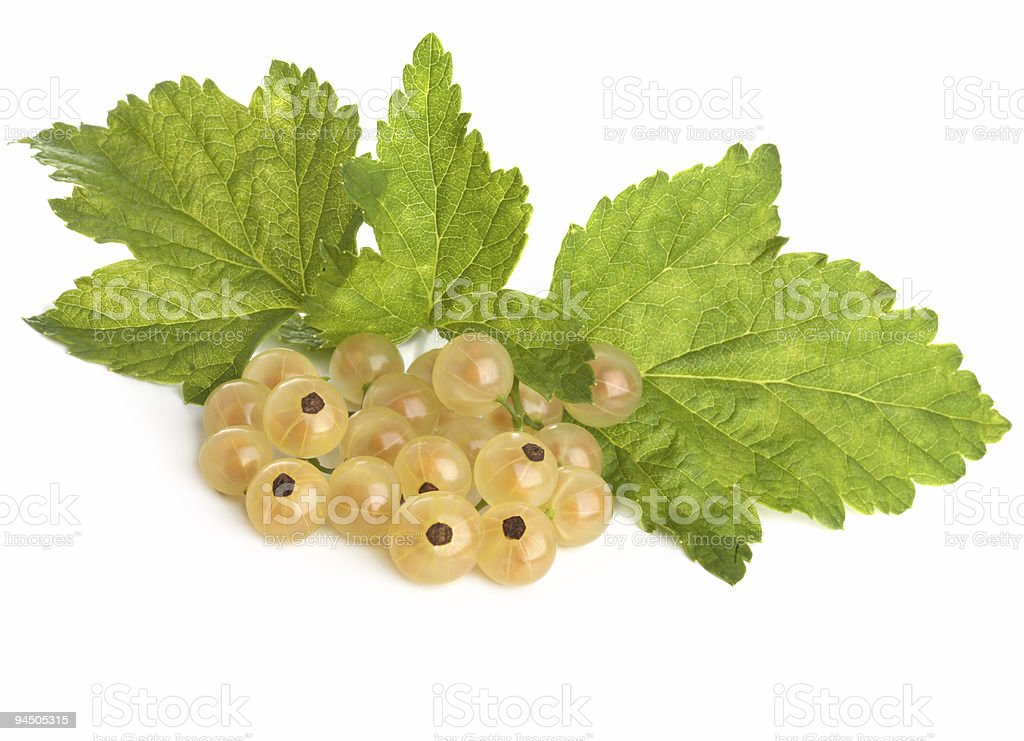 Brush of a white currant royalty-free stock photo