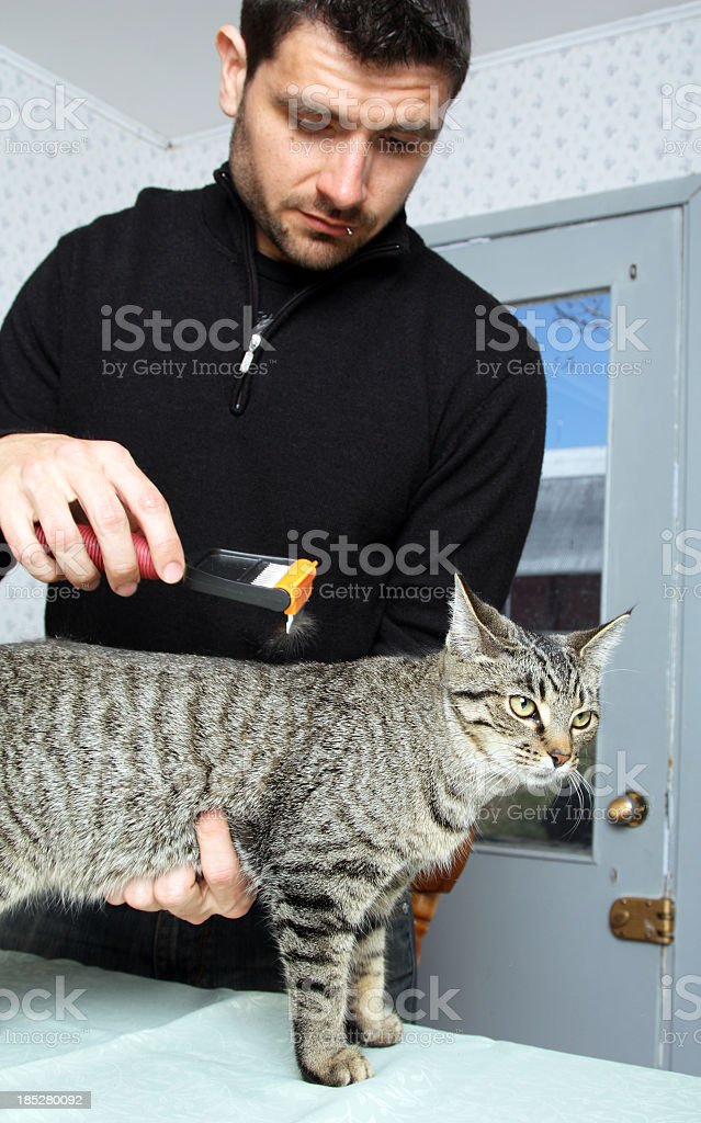 Brushing A Cat stock photo